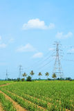 High voltage power lines in corn field Royalty Free Stock Photo