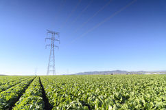 High Voltage Towers in a field with lettuces Stock Image