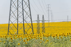 High voltage towers in sunflower field Stock Image