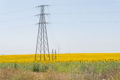 High voltage towers in sunflower field Royalty Free Stock Image