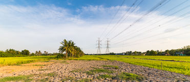 High-voltage transmission towers on green rice field Royalty Free Stock Photography