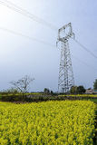 High-voltage wire rack in Canola flower fields. Royalty Free Stock Images