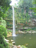High watefall with the jungle. Around - Misol Ha - Mexico Royalty Free Stock Photography