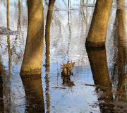 High water. The trees in the water in spring Stock Photos