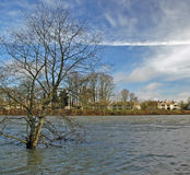 High Water. Rising river swamps trees royalty free stock image