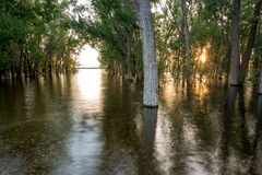 High water flood takes over a forest Stock Images