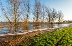 High water level in the river. The floodplain is almost completely flooded due to the high water level in the Dutch rivers Stock Photos