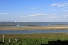 A high water refuge for birds on the salt marshes with high tide in zeeland, holland stock photo