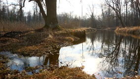 High water in spring forest stock footage
