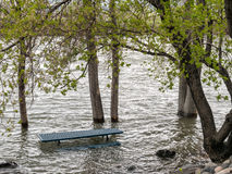 High water, Truckee River Royalty Free Stock Images