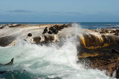 High wave at the Seal Island. Natural place of rest of the wild seals in South Africa royalty free stock image