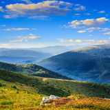 High wild plants at the mountain top Stock Photography