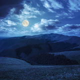High wild plants at the mountain top at night Royalty Free Stock Photo
