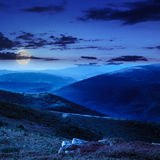 High wild plants at the mountain top at night Stock Photo