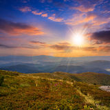 High wild plants at the mountain top at sunset Royalty Free Stock Photo