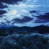 High wild plants in  mountains in moon light Royalty Free Stock Photography