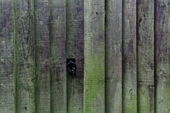 What`s behind the wooden fence? stock photo