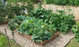 Vegetable beds with cabbages, cucumbers, tomatoes in a vegetable garden equipped according to the principle of organic farming. stock images