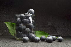 Highbush american blueberry Royalty Free Stock Photography
