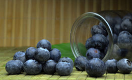 Highbush american blueberry Stock Photography