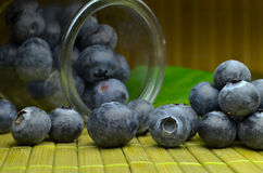Highbush american blueberry Stock Images
