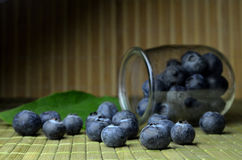 Highbush american blueberry Royalty Free Stock Image