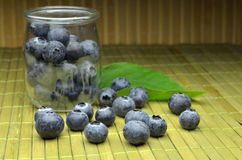 Highbush american blueberry Stock Photos