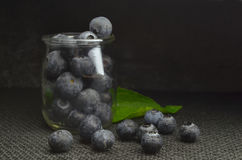 Highbush american blueberry Royalty Free Stock Photos