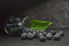 Highbush american blueberry Royalty Free Stock Images
