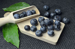 Highbush american blueberry Stock Photo