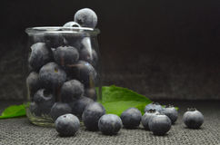 Highbush american blueberry Royalty Free Stock Photo