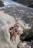 Higher and higher. Monkey babies climbing the rock Stock Photos