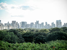 Higher than Central Park's canopy Royalty Free Stock Image