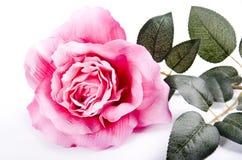 Highkey della Rosa Fotografia Stock
