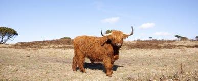 Highland Royalty Free Stock Images