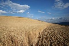 Highland barley farmland in dongchuan of china Royalty Free Stock Photos