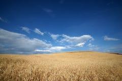 Highland Barley Farmland In Dongchuan Of China Stock Image