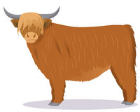 Highland cattle cow royalty free illustration