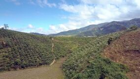 Highland with coffee trees flowering on hill slope. Pictorial aerial view Vietnamese highland with coffee trees flowering on green hill slopes against blue sky stock footage
