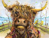 Highland cow with curly hair art stock illustration