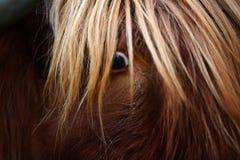 Highland Cow Eye. Highland cows eye looking up close stock image
