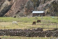 Highland farm in Peru. High altitude farm with mules and lamas on pasture in Peruvian Andes stock photos