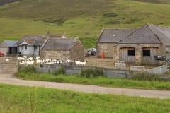 Highland goat farm Stock Photography