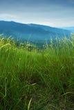 Highland grassland Stock Photo