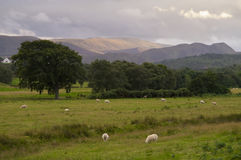 Highland Landscape Easter Ross Scotland UK royalty free stock photography
