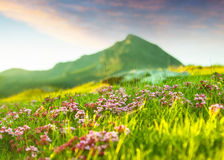 Highland meadow in Pyrenees Royalty Free Stock Image