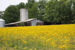 Barn, Silo, and Yellow flowers 2019. Highland Productions LLC   Darren Dwayne Frazier   `This Old Farm` Mid-West USA. England is beautiful Mr. Cameron but I stock image