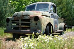 Daisy`s and Dodge Truck 2019. Highland Productions LLC   Darren Dwayne Frazier     Wild Daisy`s and Old Dodge truck sit on the roadside. This use to be a Fruit royalty free stock photos
