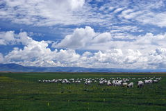 Highland Ranch. Taken in China's Gansu Marque Royalty Free Stock Image
