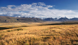A highland river valley with yellow grass on a background of snow covered high mountains and glaciers Royalty Free Stock Photo